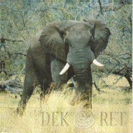 http://dekoret.pl/6036-thickbox_org/serwetka-slo-safari.jpg