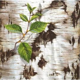 Rośliny, drzewa